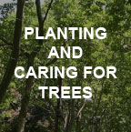 Planting and Caring for Trees